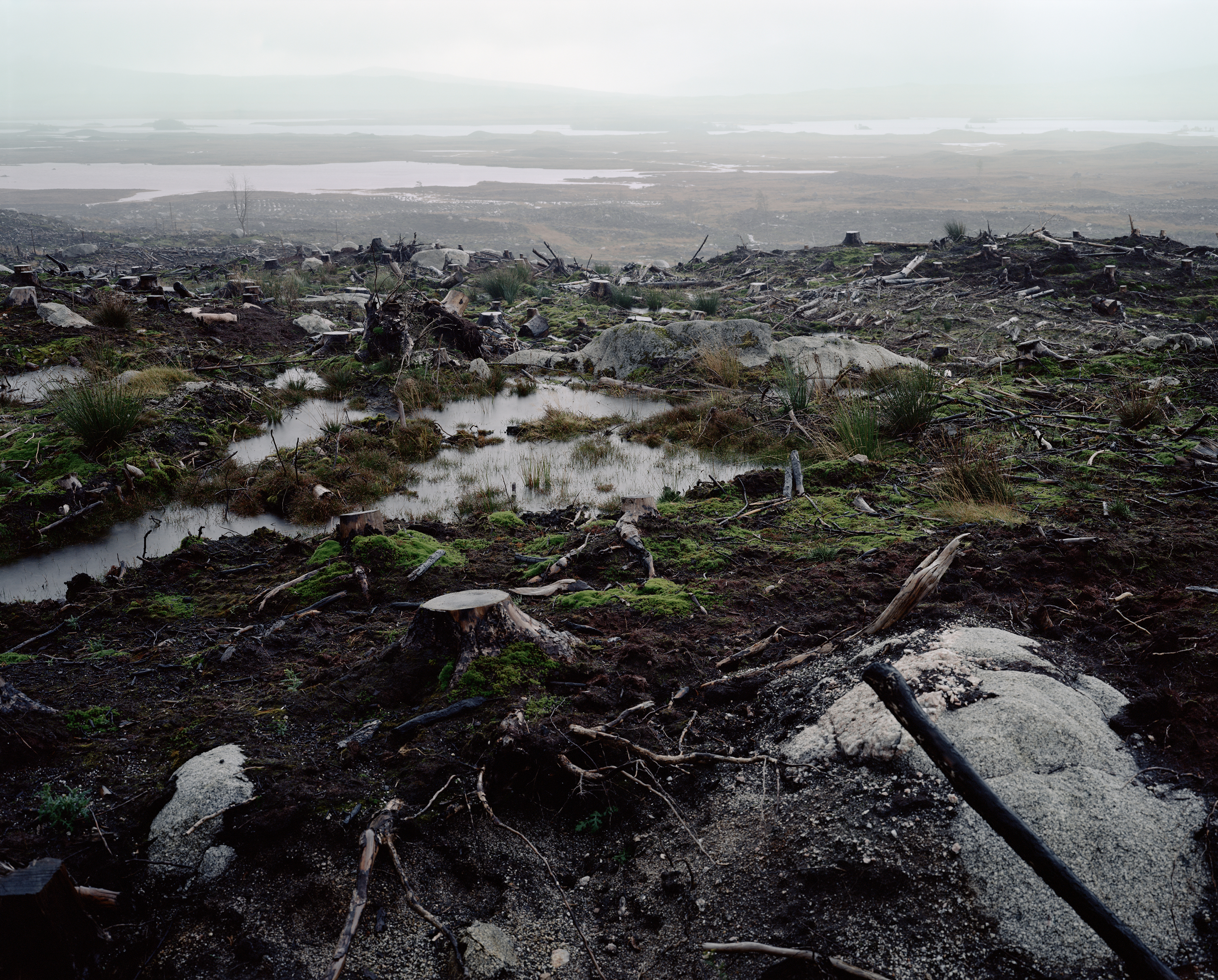Photographs of Clear Felling Scoltland