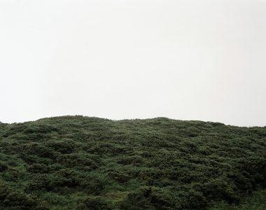 Green Gorse, Ffynnonofi,  Wales, 2003  C-type print  1750 x 1450mm