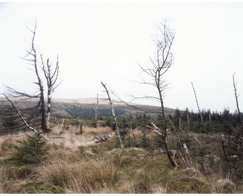 Sitka Spruce Clear Felling Wales
