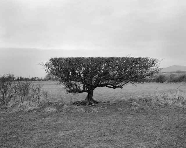 Thumbnail-Hedgerow-Pembrokeshire-Wales-2019-scaled-1